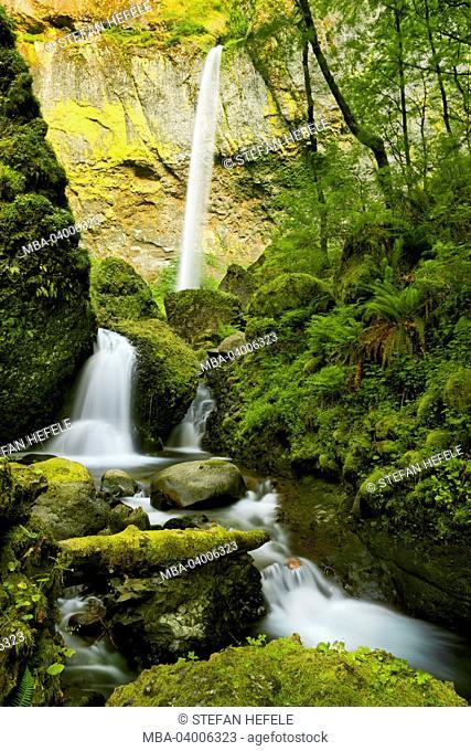 The USA, America, Columbia River Gorge, Elowah Falls, waterfall, green, jungle, wood, rain, fern, enchanted, moss