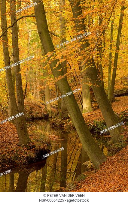 autumn forest river, the netherlands, Leuvenumse bos