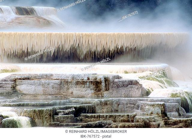 Steam hanging over terraced mineral deposits of the Mammoth Hot Springs, Yellowstone National Park, Wyoming, USA