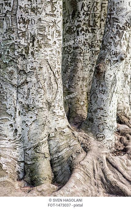 Full frame shot of carved tree trunks