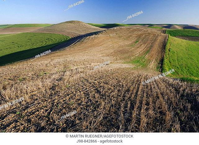 Planted and fallow fields in the Palouse Hills near Colfax The verdant Palouse stretches across more than 2 million acres in eastern Washington and western...