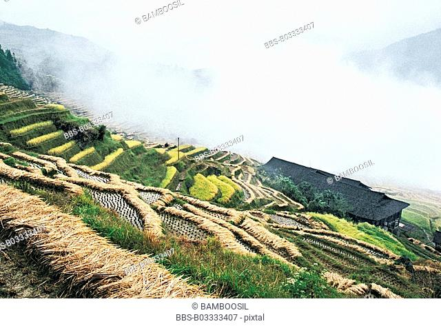 Longji Terraces, Longji, Longsheng County, Guilin City, Guangxi Zhuang Nationality Autonomous Region of People's Republic of China