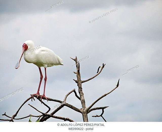 Bird in Bird's Island, Ziguinchor, Senegal