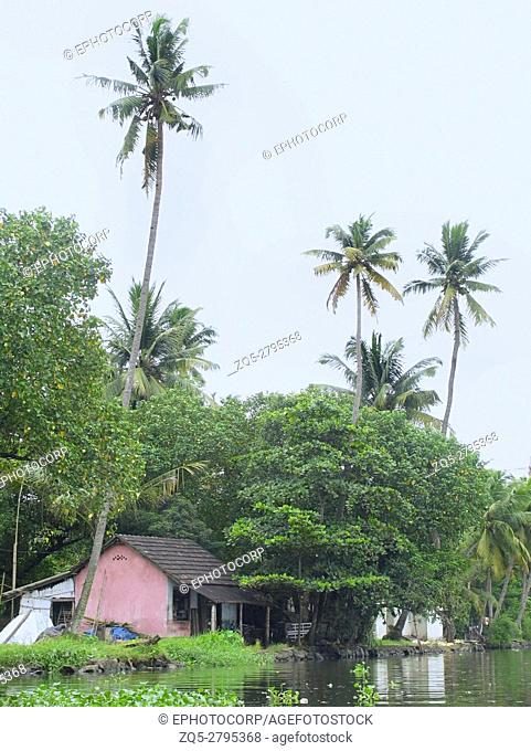 Landscape of coconut trees and houses. Backwaters of Kerala. India