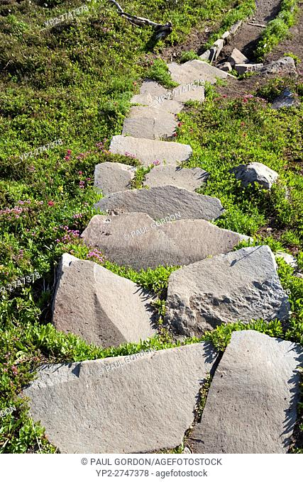 Mount Rainier National Park, Washington: Stone steps in a subalpine meadow surrounded with pink mountain-heather and magenta paintbrush along Spray Park Trail