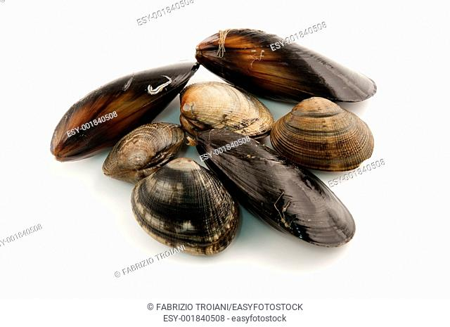 Edibile molluscs Mediterranean mussel and Japanese littleneck on a white background