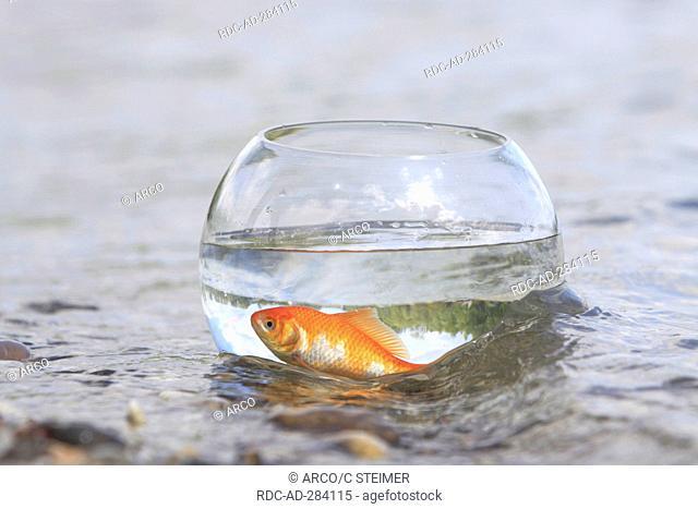 Goldfish in bowl, at lakeside / Goldfish bowl