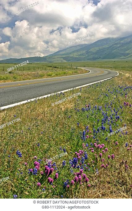 Wildflowers border a California Highway