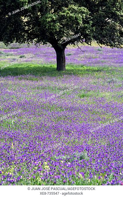 Meadow near Ubeda in spring. Jaen province, Andalucia, Spain