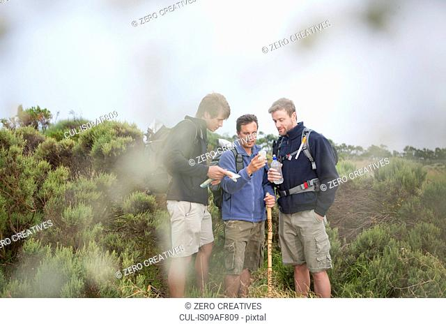 Three male hikers looking at smartphone