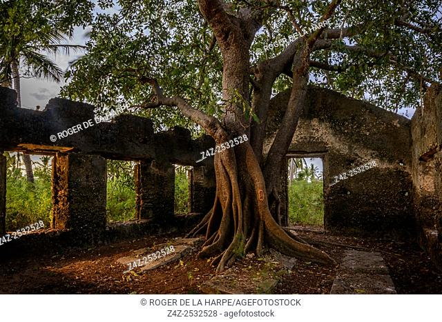 Tree growing in an old mausoleum. Ibo Island. Mozambique