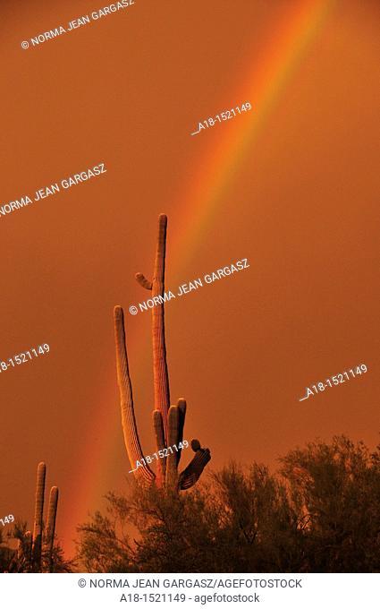 A rainbow appears at sunset during a monsoon rain storm in Tucson, Arizona, Sonoran Desert, USA