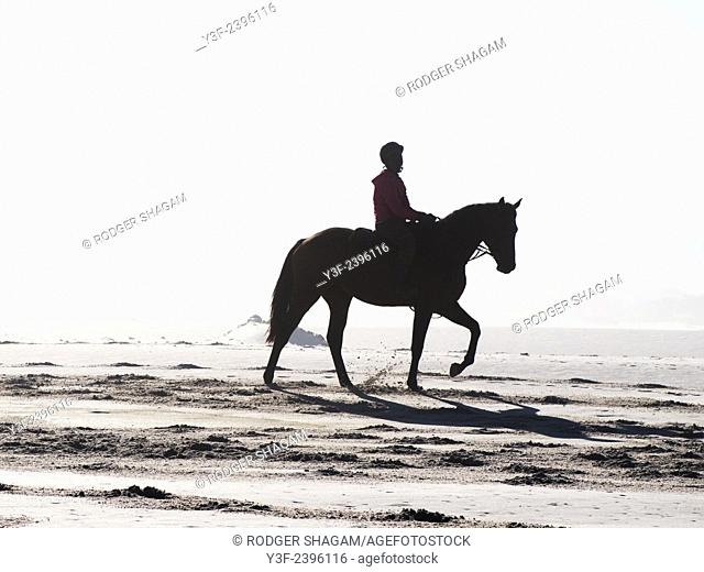 Race horse being exercised on the beach as the sun rises. Noordhoek Beach, Cape Town, South Africa