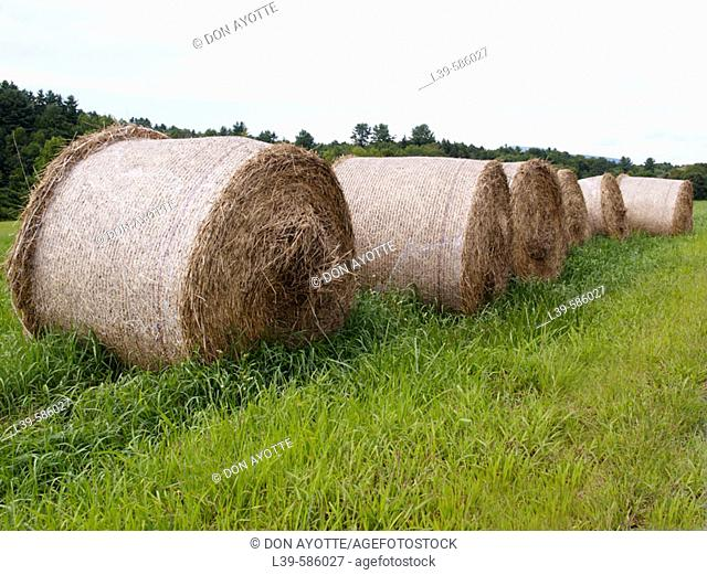 Hay field outside Montreal. Quebec. Canada