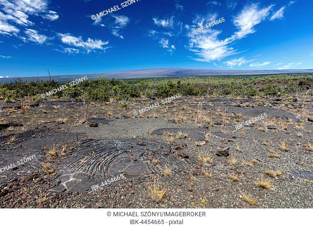 Pahoehoe lava from Kilauea volcano eruptions, Mauna Loa volcano in the background, Ka'u Desert, Hawai'i Volcanoes National Park, Big Island of Hawai'i, USA