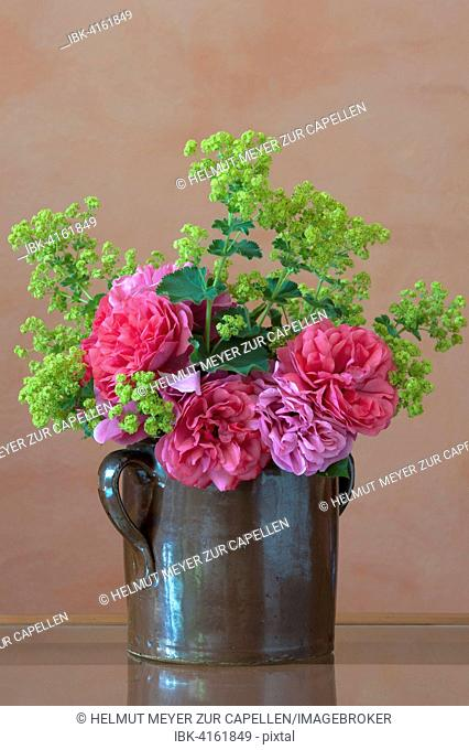 Bouquet in clay jug on table, Cariona rose and lady's mantle (Alchemilla sp.)