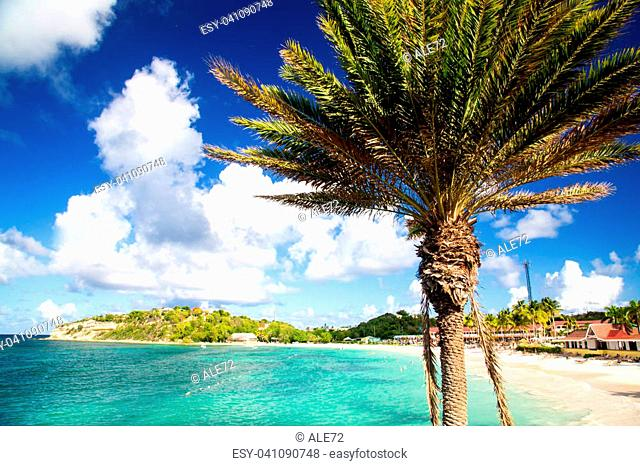 Antigua, white sand and palm on Long Beach