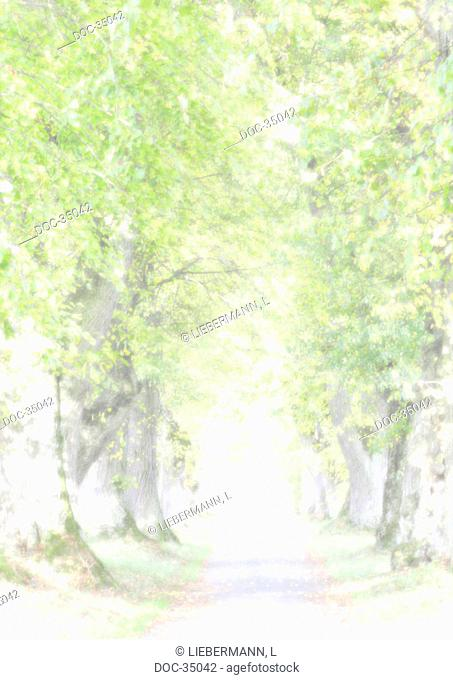 wind - illustration of an avenue lined with trees - the end is bright enlightened - Tod - death