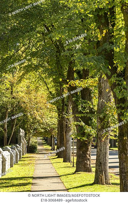 Canada, BC, Vancouver. Tree lined sidewalk in upscale neighbourhood in the west Side of the city
