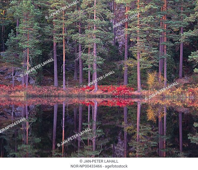 Reflection of trees in the lake