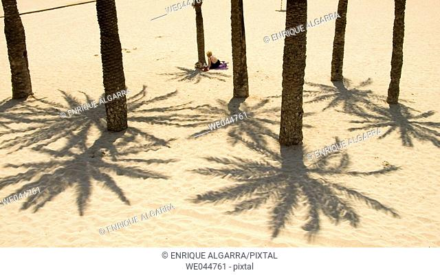 Palm trees and  Sand in Poniente Beach, Benidorm. Alicante province. Spain