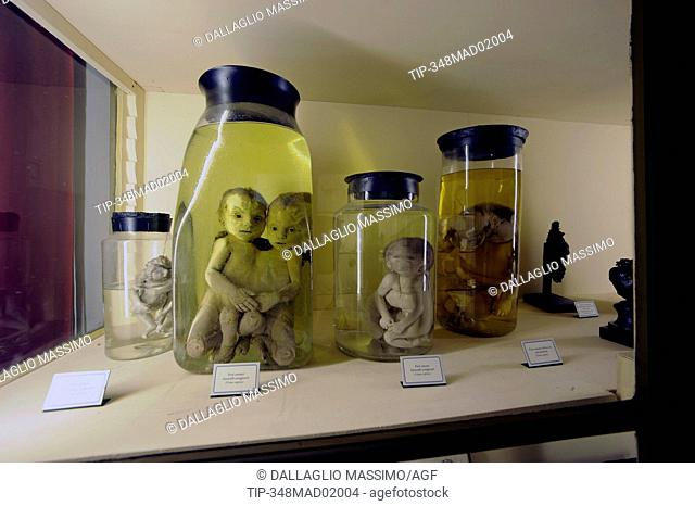 Lazzaro Spallanzani, collection at Civic Museums of Reggio Emilia. Palace of Museum in Reggio Emilia, Italy, Europe