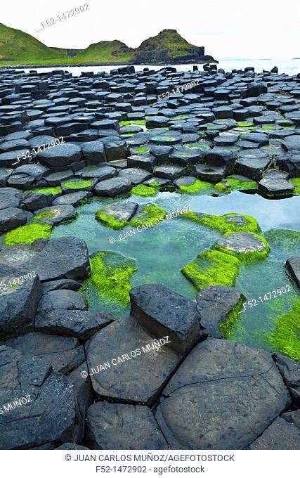 The Giant's Causeway  World Heritage Site  Causeway Coastal Route  Antrim County, Northern Ireland, Europe