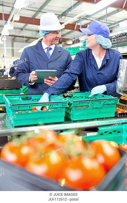 Quality control workers with digital tablet sorting tomatoes on production line in food processing plant