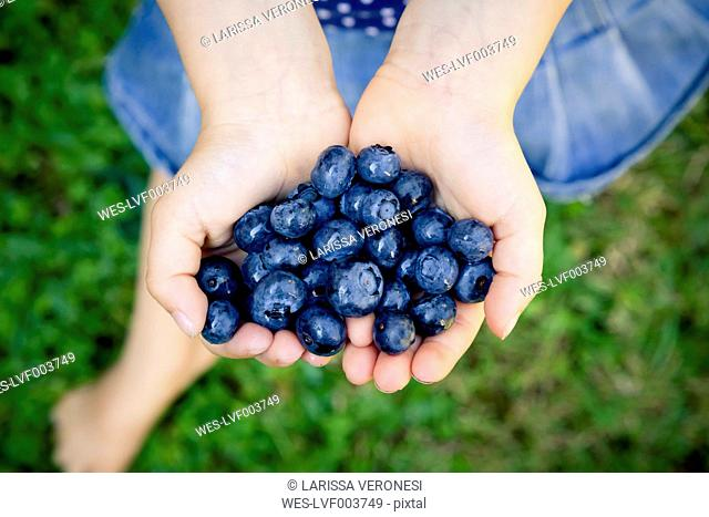 Little girl's hands holding blueberries