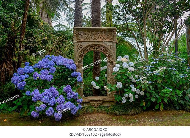 Hortensien, Hydrangea, Monte Palace Tropical Garden, Monte, Funchal, Madeira, Portugal