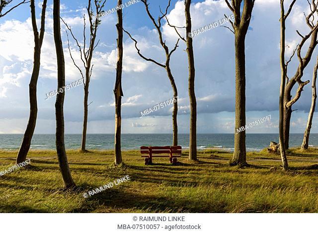 Coastal forest with bench, Ghost Forest (Gespensterwald), Nienhagen, Baltic Sea, Western Pomerania, Mecklenburg-Vorpommern, Germany