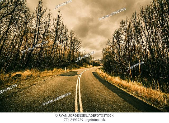 Contrasted low-angle road landscape of a double lined highway turning through a scary woodland. Captured in Gormanston, Tasmania, Australia