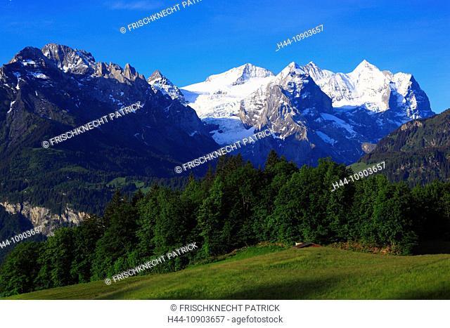 Alp, alps, flora, view, Hasliberg, mountain, mountains, mountain flora, mountain spring, mountain massif, Bern, Bernese Oberland, flowers, Engelhörner, flora