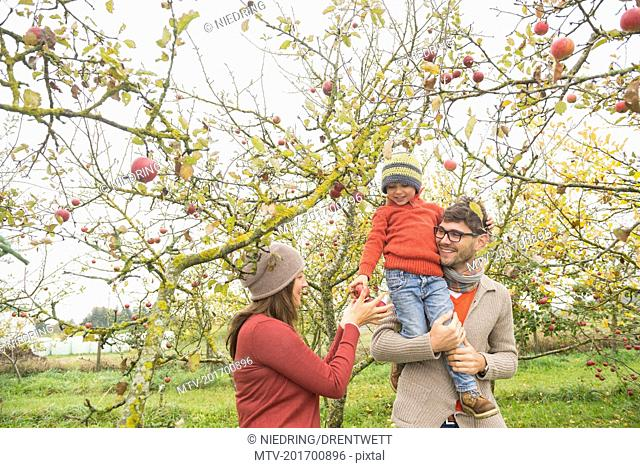 Son on father's shoulder giving apples to his mother, Bavaria, Germany