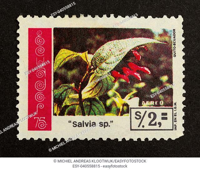 ECUADOR - CIRCA 1980: Stamp printed in Ecuador shows a flower, circa 1980