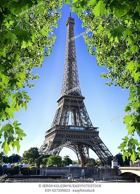 Eiffel Tower and maple tree in Paris, France