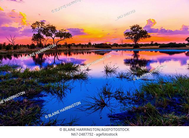 Twilight at a pond, Kwando Concession, Linyanti Marshes, Botswana