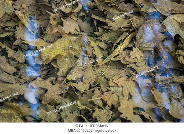 Autumn foliage in the ground of a clear brook, light reflexions