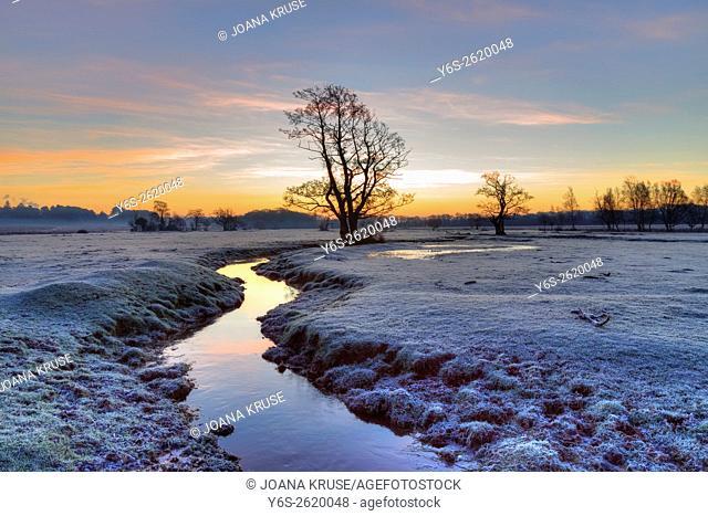 Longwater Lawn; New Forest; Lyndhurst; Hampshire; England;