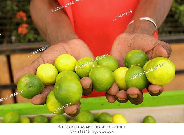 Limes in street market, Cartagena de Indias, Colombia