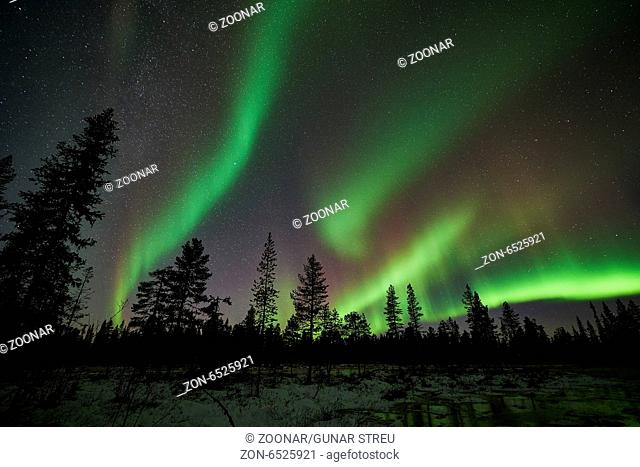 Northern lights, Muddus NP, Lapland, Sweden
