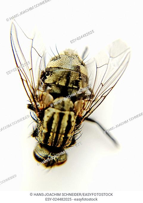fly, macro shot