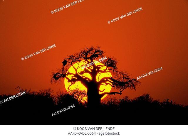 Setting sun, Botswana