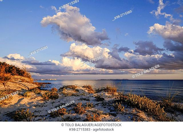 Ses Covetes beach, protected natural area, Campos, Majorca, Balearic Islands, Spain
