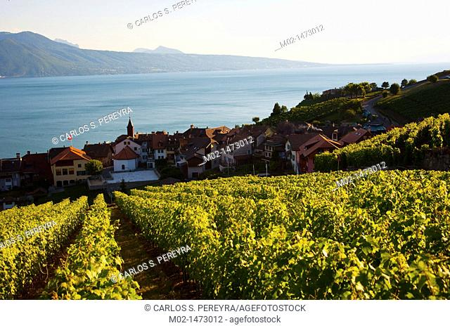 View of Lavaux and Lake Leman  Lavaux is part of a World Heritage Site and is a wine production area with terraces formed since the time of the Romans  Lake...