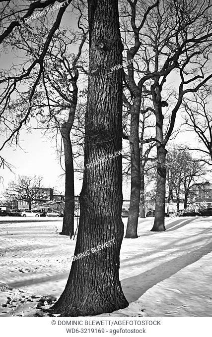 Trees in the snow in Berlin, Germany