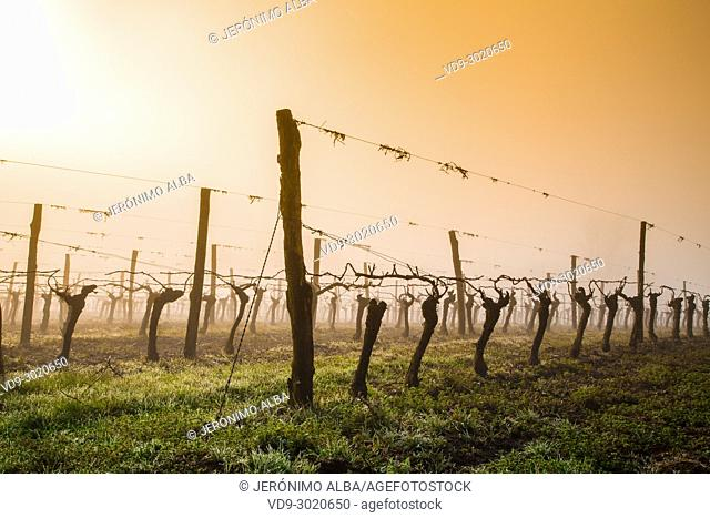 Landscape of armagnac vineyards. Lannepax. Le Gers Department, New Aquitaine, Midi Pyerenees. France Europe