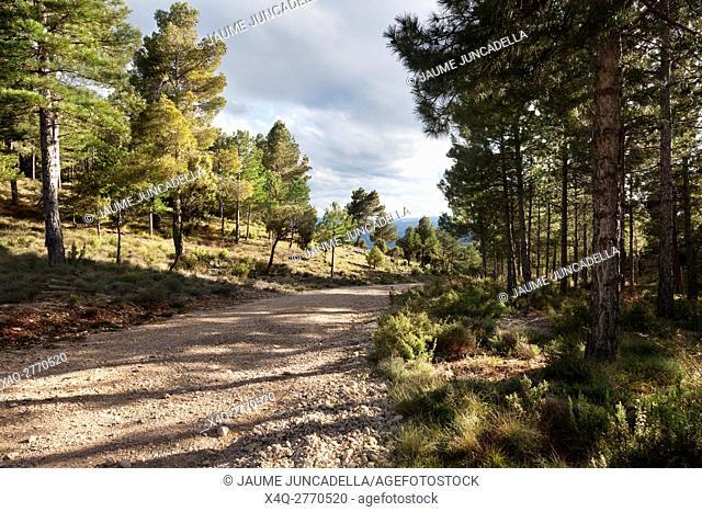 Way to la Picosa. Teruel Province