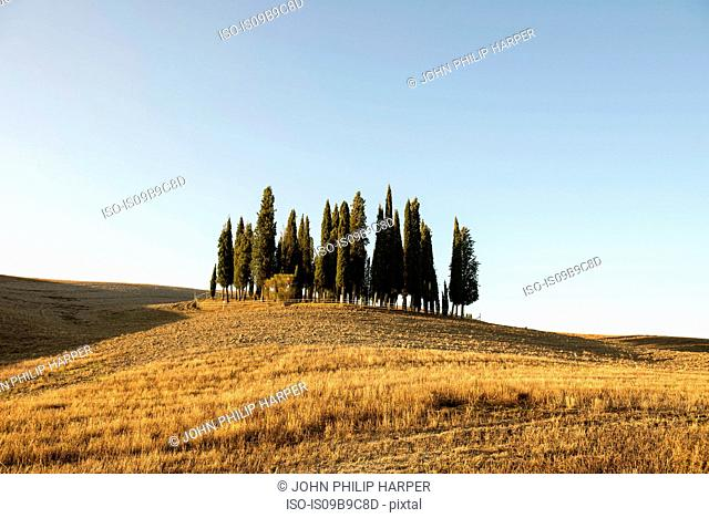 Rolling landscape with cypress trees on hill, Tuscany, Italy