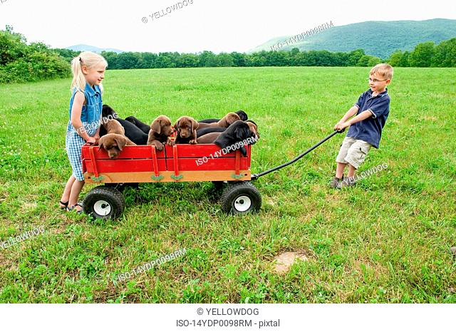 Kids pulling puppies in a wagon